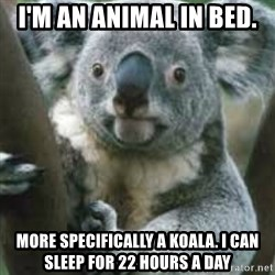 koalafications - I'm an ANIMAL IN BED.  MORE SPECIFICALLY A KOALA. I can sleep for 22 hours a day