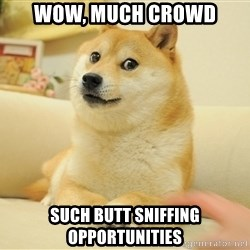 so doge - wow, much crowd such butt sniffing opportunities
