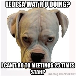 stahp guise - LeDesa wat r u doing? i can't go to meetings 25 times stahp
