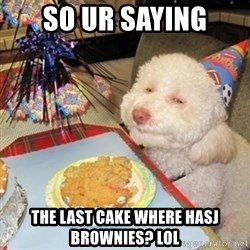 Birthday dog - SO UR SAYING THE LAST CAKE WHERE HASJ BROWNIES? LOL