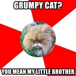 Diabetic Cat - Grumpy cat? You mean my little brother