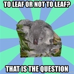 Clinically Depressed Koala - To leaf or not to leaf? That is the question