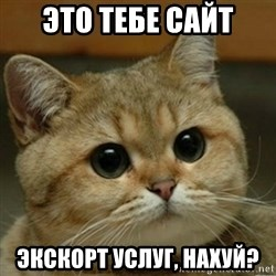 Do you think this is a motherfucking game? - это тебе сайт экскорт услуг, нахуй?