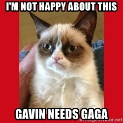 No cat - I'm NOT happy about this Gavin needs Gaga