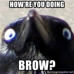 insanity crow - How're you doing Brow?
