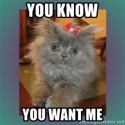 cute cat - You know you want me