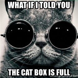 Morpheus Cat - what if I told you the cat box is full