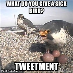 #CEFalcons - What do you give a sick bird? tweetment