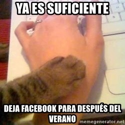 It's time to stop cat - YA ES SUFICIENTE DEJA FACEBOOK PARA DESPUÉS DEL VERANO