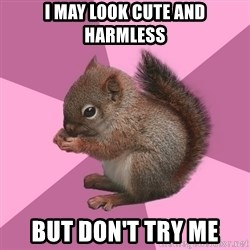 Shipper Squirrel - I may look cute and harmless But don't try me