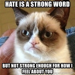 Grumpy Cat  - hate is a strong word but not strong enough for how i feel about you