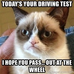 Grumpy Cat  - Today's your driving test i hope you pass... out at the wheel