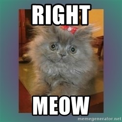 cute cat - RIGHT MEOW
