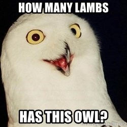 O Rly Owl - HOW MANY LAMBS HAS THIS OWL?