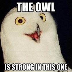 O Rly Owl - The owl is strong in this one