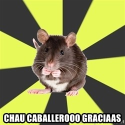 Survivor Rat -  Chau caballerooo graciaas