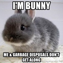 ADHD Bunny - i'm bunny me & garbage disposals don't get along