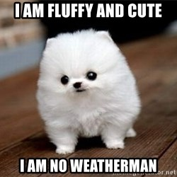 more meat for my duck - i am fluffy and cute i am no weatherman