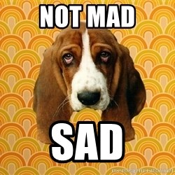 SAD DOG - not mad sad