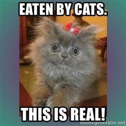 cute cat - Eaten by cats. This is real!
