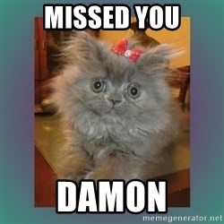 cute cat - Missed you Damon