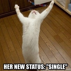"praise the lord cat -  her new status: ""single"""
