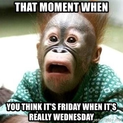 Shocked Monkey - That moment when you think it's friday when it's really wednesday