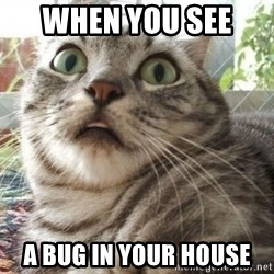 scared cat - when you see  a bug in your house