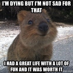 Seemingly Innocent Quokka - i'm dying but i'm not sad for that I had a great life with a lot of fun and it was worth it