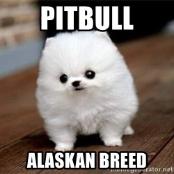 more meat for my duck - pitbull alaskan breed