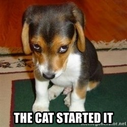 sorry dog -  the cat started it
