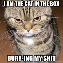angry cat 2 - I am the cat in the box Bury-ing my shit