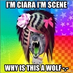 Scene Wolf - I'm Ciara I'm scene  Why is this a wolf -.-