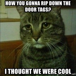Depressed cat 2 - How you gonna rip down the door tags? I thought we were cool