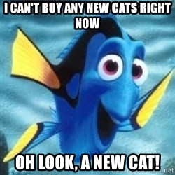 Dory - I can't buy any new cats right now Oh look, a new cat!