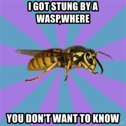 kyriarchy wasp - I got stung by a wasp,where You don't want to know