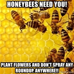 Honeybees - Honeybees need you! Plant flowers and don't spray any roundup. Anywhere!!