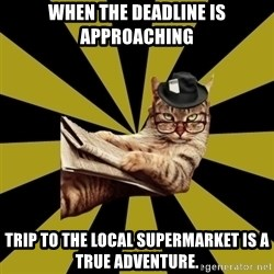 Frustrated Journalist Cat - when the deadline is approaching trip to the local supermarket is a true adventure.