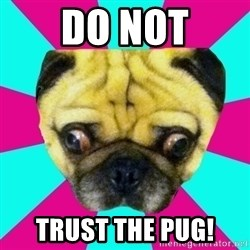 Perplexed Pug - Do not Trust the pug!