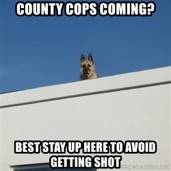 Roof Dog - county cops coming? best stay up here to avoid getting shot