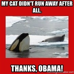 Thanks Obama! - My cat didn't run away after all. Thanks, Obama!