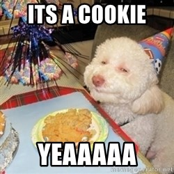 Birthday dog - its a cookie  yeaaaaa