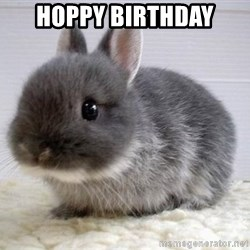 ADHD Bunny - HOPPY BIRTHDAY