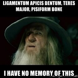 no memory gandalf - ligamentum apicis dentum, teres major, pisiform bone I have no memory of this