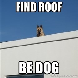 Roof Dog - Find roof Be dog