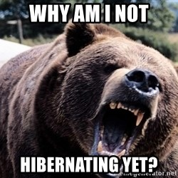 Bear week - Why am I not Hibernating yet?