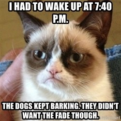 not funny cat - I had to wake up at 7:40 P.M. The dogs kept barking. They didn't want the fade though.