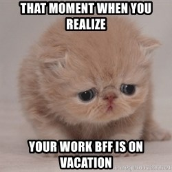 Super Sad Cat - That moment when you realize your work bff is on vacation