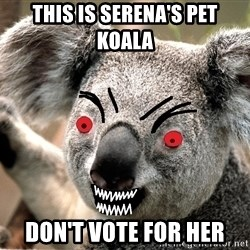 Abortion Koala - this is serena's pet koala Don't vote for her