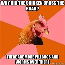 Antijokechicken - why did the chicken cross the road? there are more pillbugs and worms over there